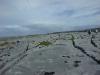 05-irland-burren-steinboden